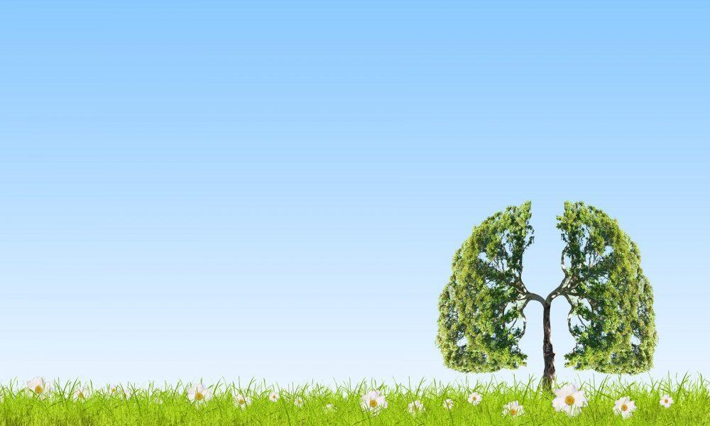 Kehkojen muotoinen puu keskellä avointa niittyä.